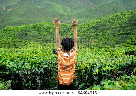 A child waving hand in the tea plantation