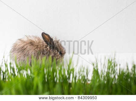 Easter bunny on green spring grass