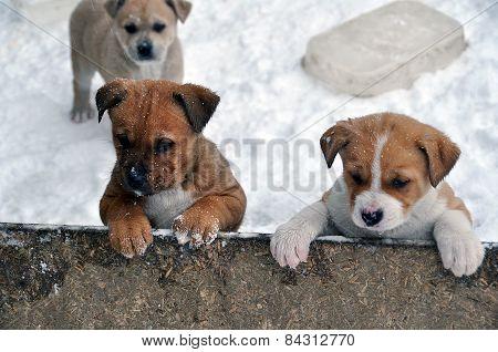 puppies at dog shelter