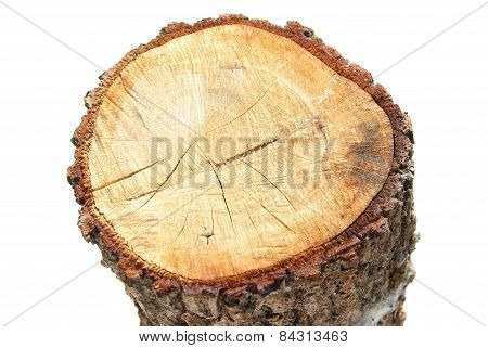 Wooden Stump
