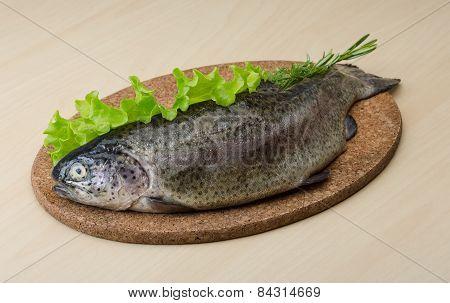 Raw Fresh Trout