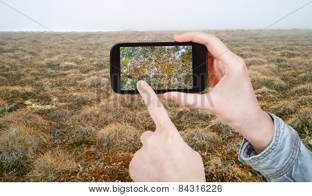 Tourist Taking Photo Of Plant In Arctic Tundra