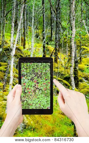 Tourist Taking Photo Of Wild Forest In Norway