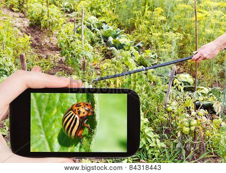 Man Taking Photo Of Spraying Pesticide In Garden