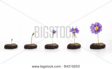 Life Of Flower