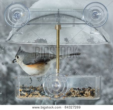 Tufted Titmouse In Window Bird Feeder