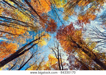 Beautiful Trees Set Against The Blue Sky. Sunset At The Autumn Forest In Crimea