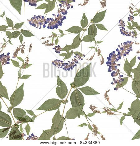 Herbarium, Dried Flowers On A White Background. Seamless Pattern