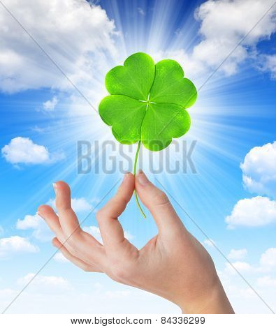 Hand holding a green four leaf clover