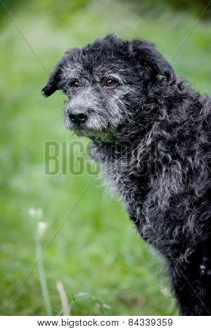 Mixed Breed Dog On Grass