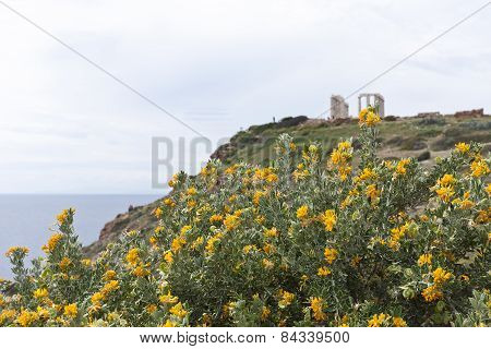 View of yellow flowers on a bush.