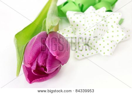 Tulip With Bow