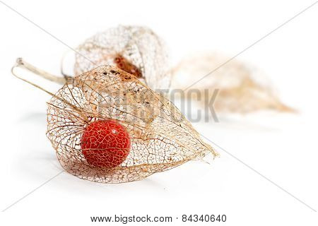 Physalis Chinese Lantern Dried Fruits Isolated On White Background