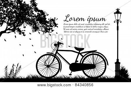 Antique Bicycle In the autumn (back and white tone)