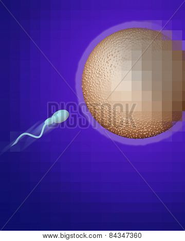 Sperm Heading Towards Egg