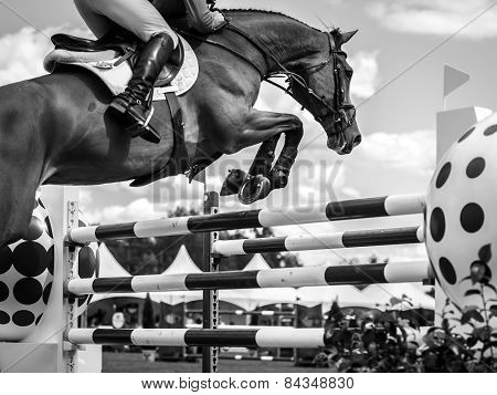 Equestian sports
