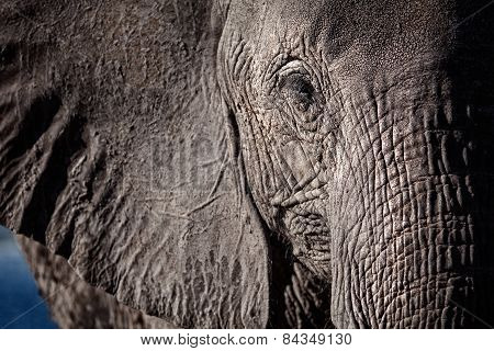 A close cropped shot of an elephants face