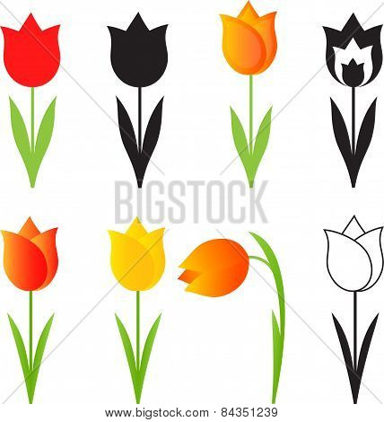 Isolated Spring Flowers Vectors, Tulip Flowers