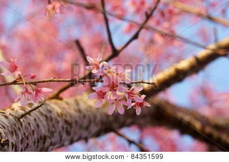 Spring Flower, Beautiful Nature, Abstract Background