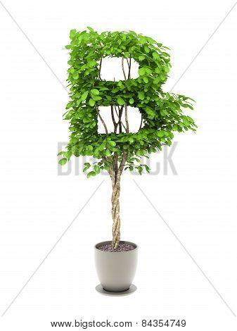 Plant Letter B
