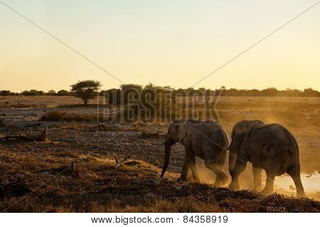 Two elephants walk off into the sunset in Etosha National Park, Namibia.