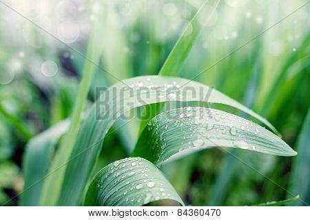 Rain drops on the leaves