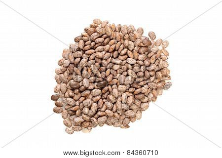 top view pinto bean