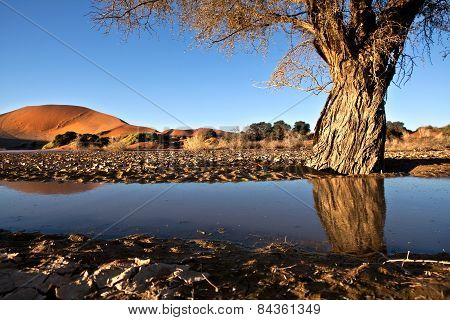 Reflection of a camel thorn tree in Sossusvlei, Namibia.