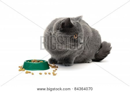 Gray Cat Eating Food From A Bowl Green On A White Background