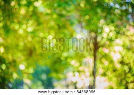 Autumn Bokeh Background