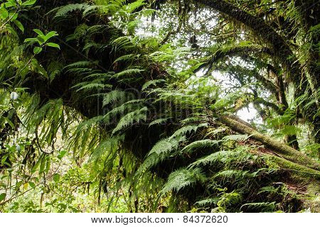 Ferns Growing On A Tree Trunk.