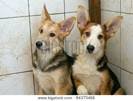 Two Puppies In A Dirty Shelter
