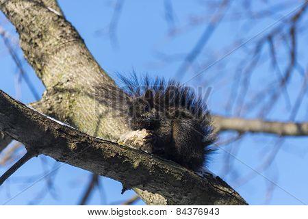 Squirrel Eats Bread