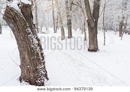 Winter Snowy Road