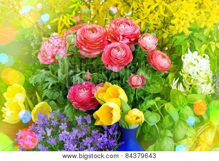 Spring Flowers. Raninculus, Campanula, Forsythia, Tulips