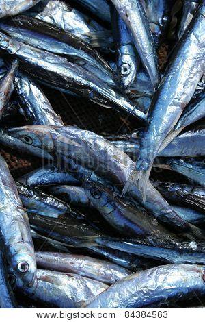 fish dry on racks beside lake Malawi