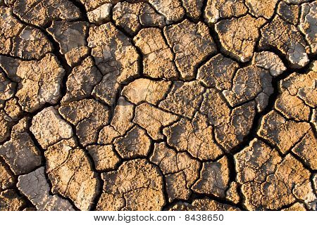 The Soil In The Fissures