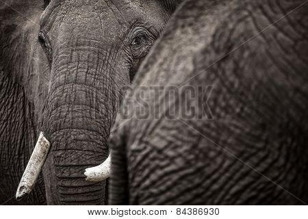 A close up of an elephants face in an abstract shot