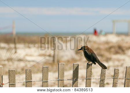 Bird Sitting on Fence