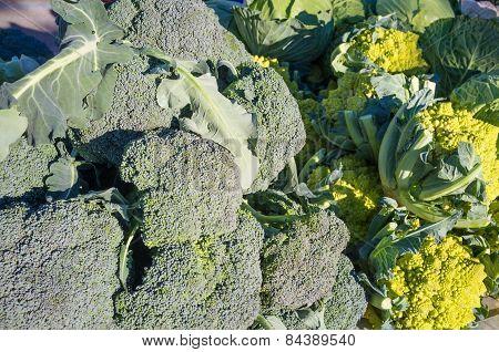 Fesh Vegetables