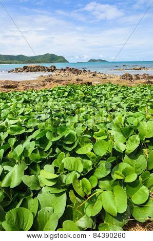 Green Plants And Sea Nature Landscape