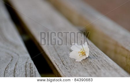 Cherry Flower On A Bench With Crisp Wooden Texture