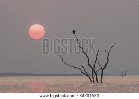 An African Fish Eagle sits in a tree on lake Kariba