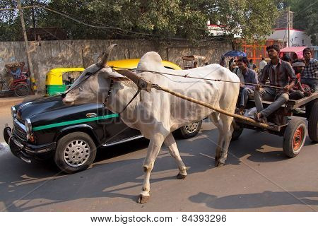 Delhi, India - November 5: Unidentified People Ride In Bullock Cart On November 5, 2014 In Delhi, In