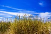 picture of dune grass  - Grass on north sea dune with a blue sky - JPG