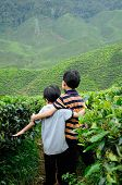 image of cameron highland  - CAMERON HIGHLAND, MALAYSIA - DECEMBER 14, 2014: Two little boy playing in the tea plantation is located in Cameron Highland, Malaysia. Cameron Highland is the most famous tea plantation in Malaysia. It is located in Pahang State in Malaysia.