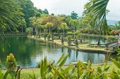 pic of fountain grass  - Tirtagangga water palace with fountains  and ponds on Bali - JPG
