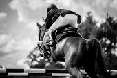 picture of bay horse  - various equine / equestrian sports action photos