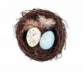 foto of bird egg  - Easter eggs in birds nest isolated on white background - JPG