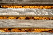 picture of corn cob close-up  - Old corn cob in stack. Corn cob in a wooden silo.